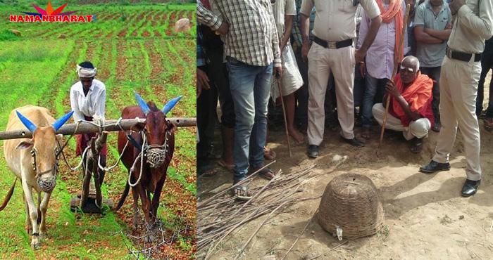 खेत की जुताई करते वक़्त गरीब किसान को मिला कुछ ऐसा की देखकर आँखें फटी की फटी रह गयी, पूरी बात जान आप भी रह जाएंगे दंग