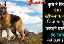 इस कुत्ते ने कर डाला है  ऐसा खौफनाक काम, अब इसे जिंदा या मुर्दा पकड़ने वाले को मिलेगा 50 लाख का इनाम