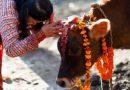 अच्छा या बुरा समय आने से पहले गाय देती हैं ये 3 संकेत, आप भी इन्हें समझ ले