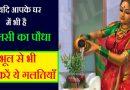 यदि आपके घर में  भी है तुलसी का पौधा तो भूल से भी न करें ये गलतियां नहीं तो हो जायेंगे बर्बाद