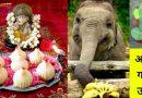 गणपति बप्पा के ये 3 उपाय आपकी झोली खुशियों से भर देंगे, एक बार जरूर आजमाए