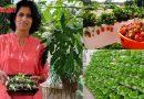 क्या कभी बिना मिट्टी के उगाई हैं फल-सब्जियां? अगर नहीं तो इन से सीखिए…