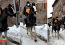 VIDEO: जब अमेजन डिलीवरी बॉय ने घोड़े पर बैठ कर की डिलीवरी, हर कोई देखता ही रह गया