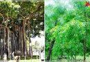 ये 6 पेड़ लाखों-करोड़ों सिलेंडर से भी कही ज्यादा मात्रा में पैदा करते है ऑक्सीजन ,देखें कौन कौन से पेड़ है शामिल